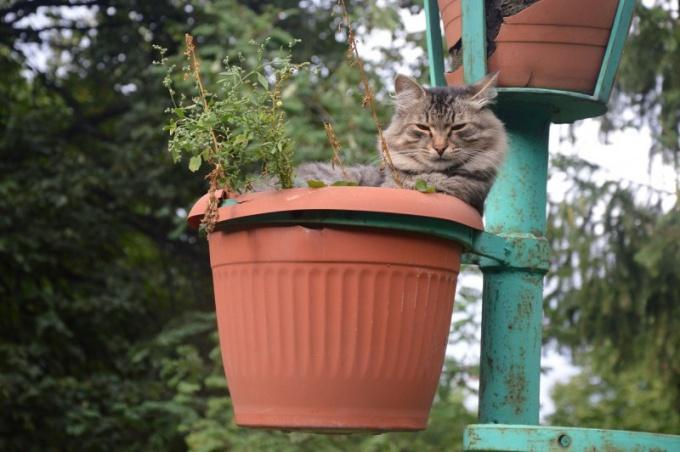 Сухой нос может быть у только что проснувшейся кошки
