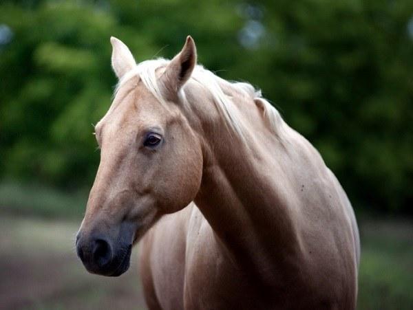 Как выбрать лошадь