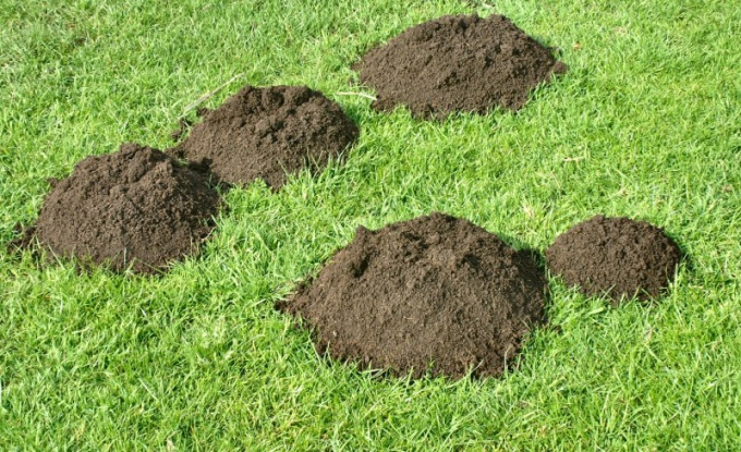 These unsightly mounds on the lawn cause many gardeners to start a fight with moles