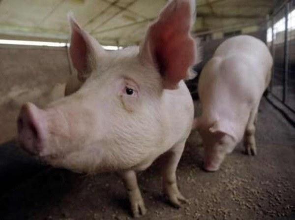 """Что означает """"метать бисер перед свиньями"""""""