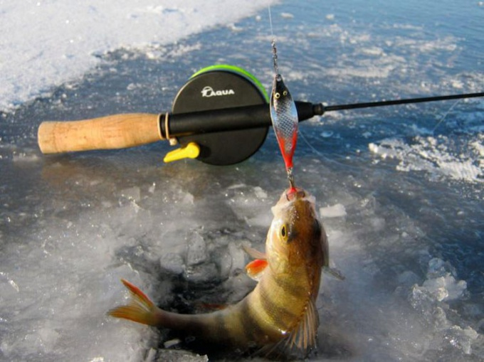 For perch using spinners