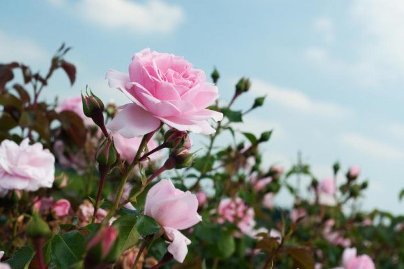 Как применять препарат «Карбофос» на садовом участке