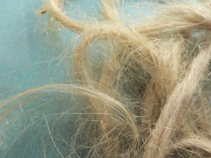 Пенька - волокно, полученное из стеблей конопли