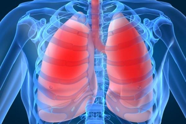 Органы - один из организменных уровней организации жизни