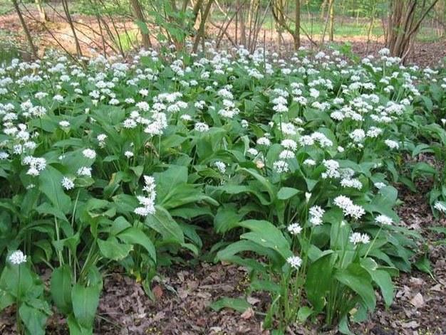 Обработка лесной земли под цветы