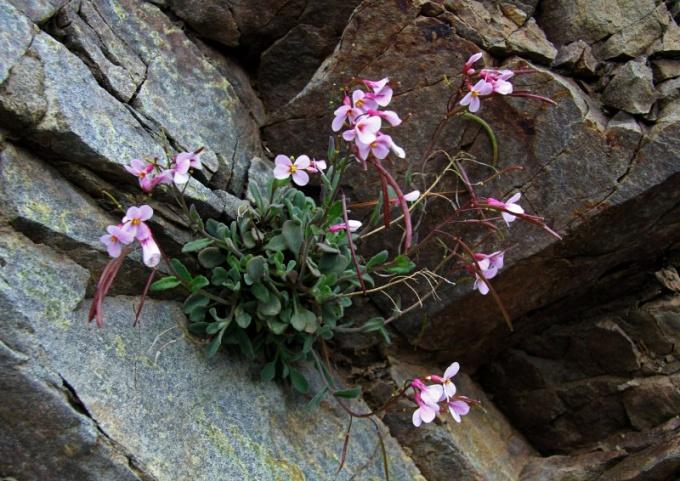 Почему растения могут ускорить разрушение камней