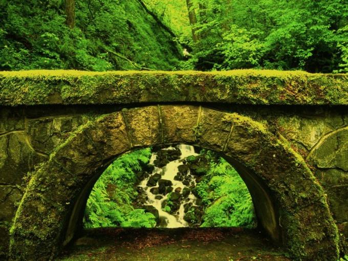 Мост, покрытый плеврококком.