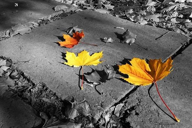 Осенняя депрессия: методы борьбы