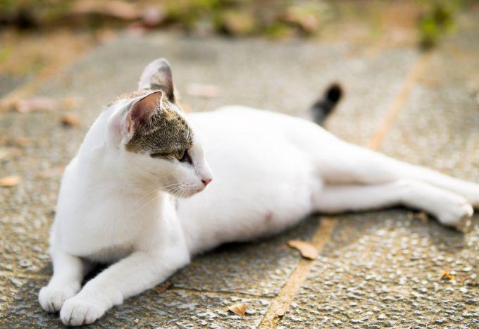 Кошка беременна поведение