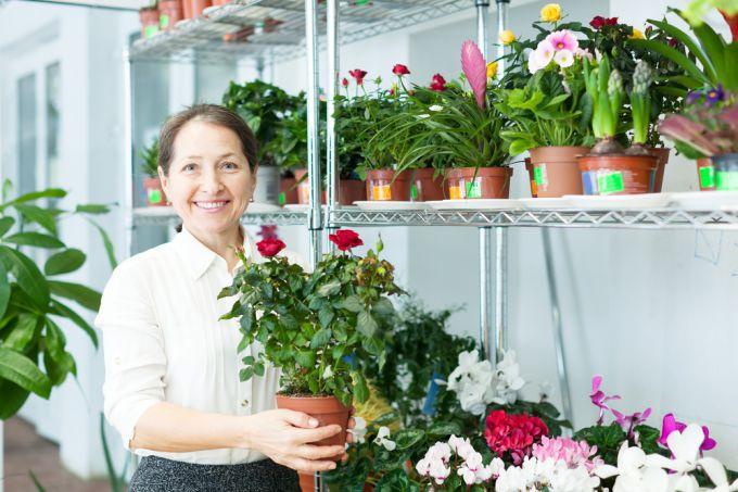 Сорта роз для комнатного выращивания