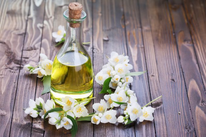 Jasmine oil: useful properties, application