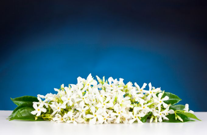 Neroli oil: useful properties, application