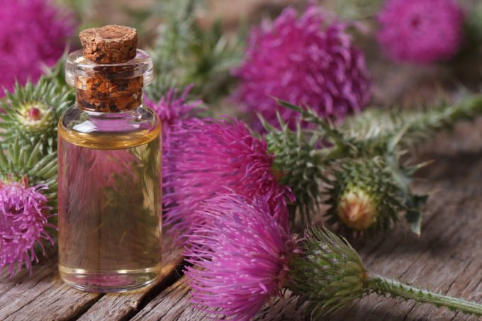 Thistle oil for weight loss