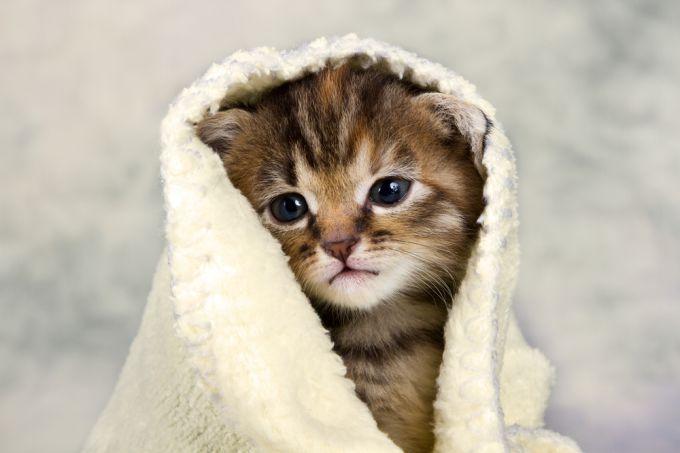 Помощь котенку при слезотечении