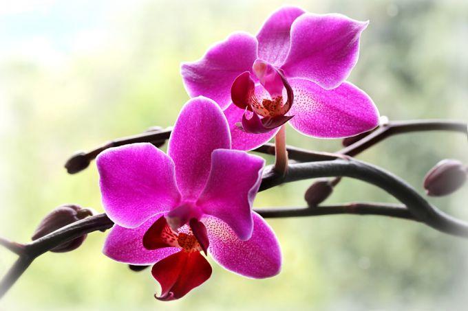 Правила ухода за орхидеей в домашних условиях