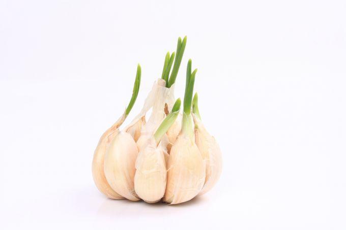 Стрелки чеснока: полезные свойства, рецепты блюд