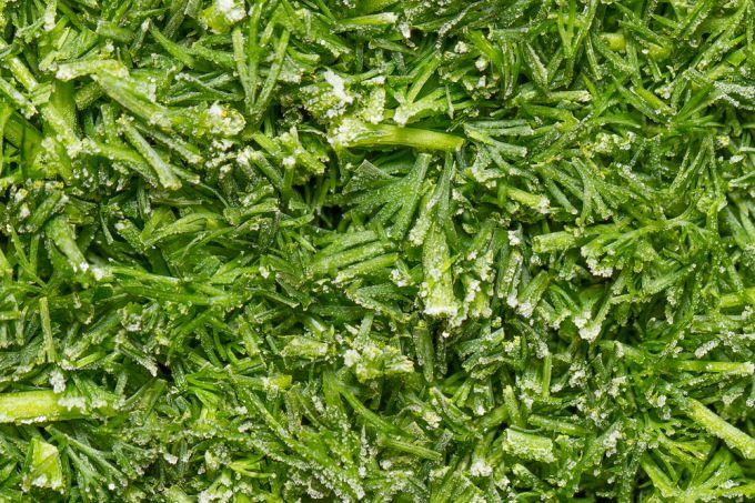 Как заморозить зелень? Зимние заготовки