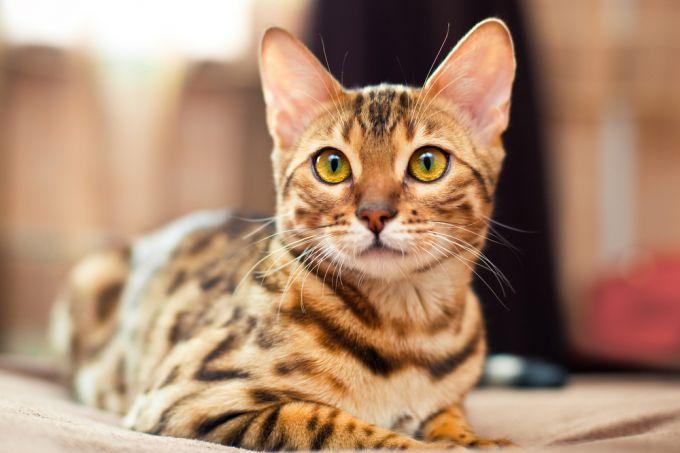 Кастрация кота: что необходимо знать любящему хозяину