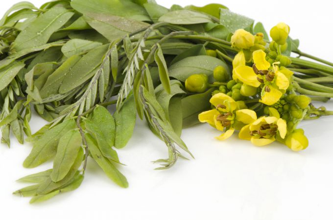 Применение сенны: трава для похудения