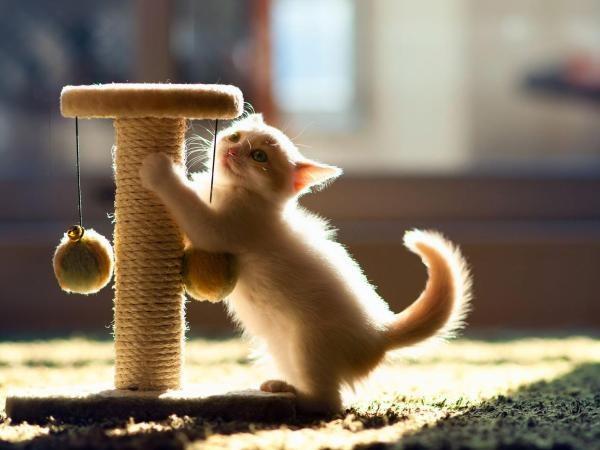 Как сделать домик и когтеточку для кошки 7