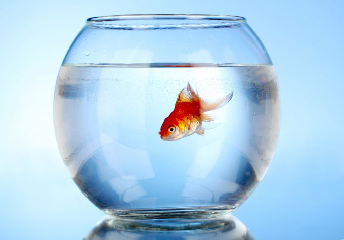 Правила выбора мини-аквариума