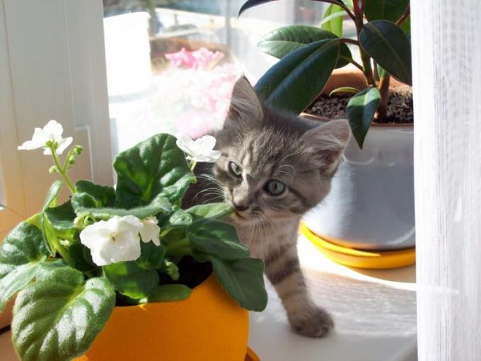 Как восстановить цветы после нашествия кошки