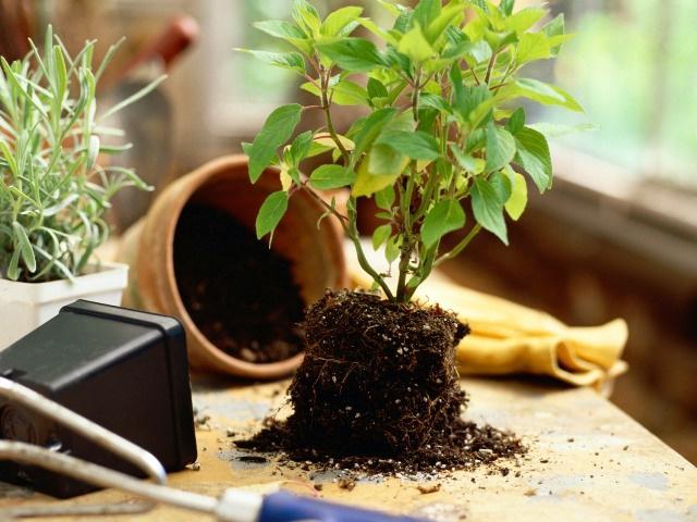 Пять натуральных удобрений для цветов