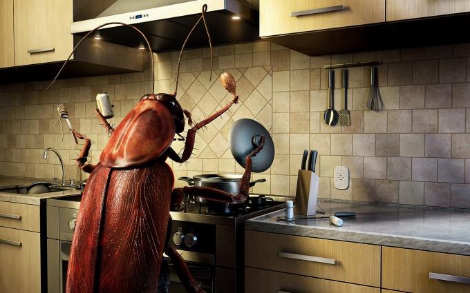 Узнайте, как избавиться от тараканов в квартире навсегда в домашних условиях