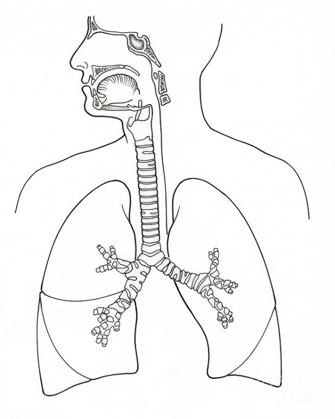 Отчего у человека две ноздри