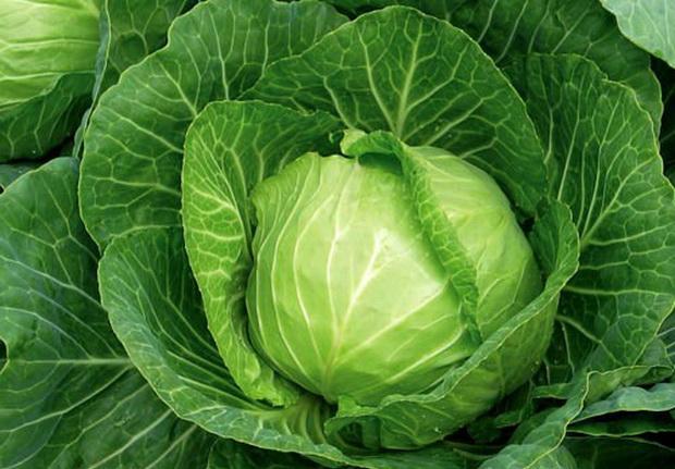 Как сохранить белокочанную капусту зимой