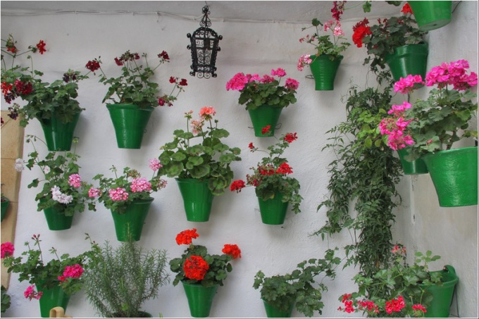 What flowers useful to keep in the apartment