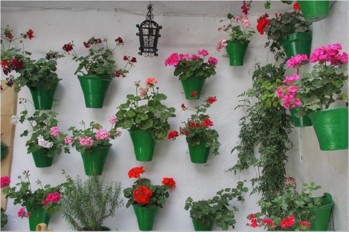 на какие комнатные цветы может быть аллергия