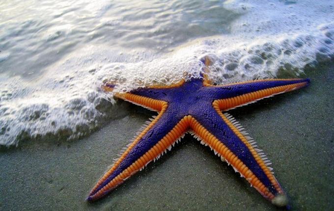 Как сделать морскую звезду из бумаги