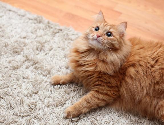Как избавиться от шерсти домашних животных в доме