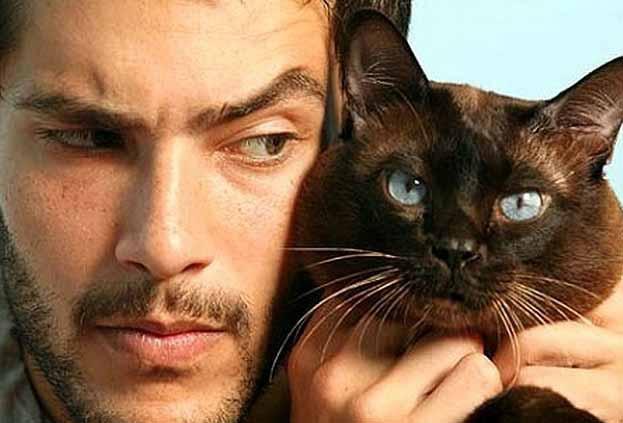 Почему люди любят кошек