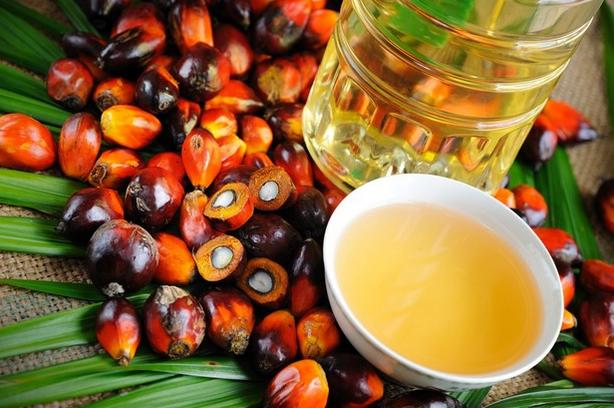 Пальмовое масло: вред или польза