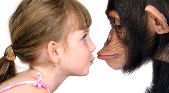 Действительно ли человек произошел от обезьяны, как мы привыкли думать?