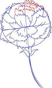 Как нарисовать гвоздику карандашом поэтапно