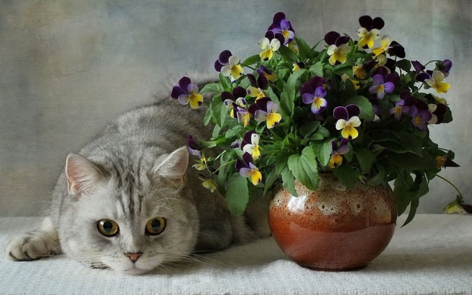 Важно защитить цветы от кошек и кошек от цветов