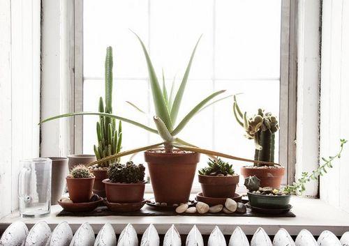 Прямые солнечные лучи выносят не все растения