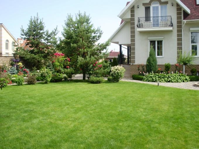 Красивый газон требует тщательного ухода