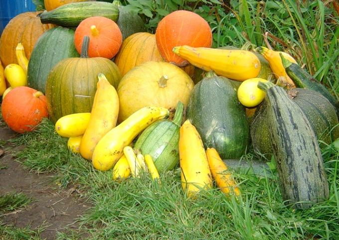 Сохранить урожай - значит обеспечить себя витаминами