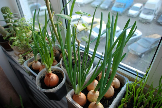 Самое простое - вырастить на подоконнике свежую зелень
