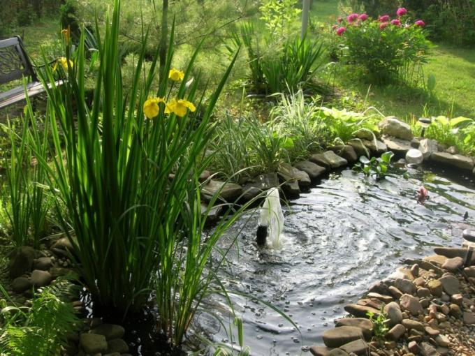 Как сделать пруд на даче из старой ванны