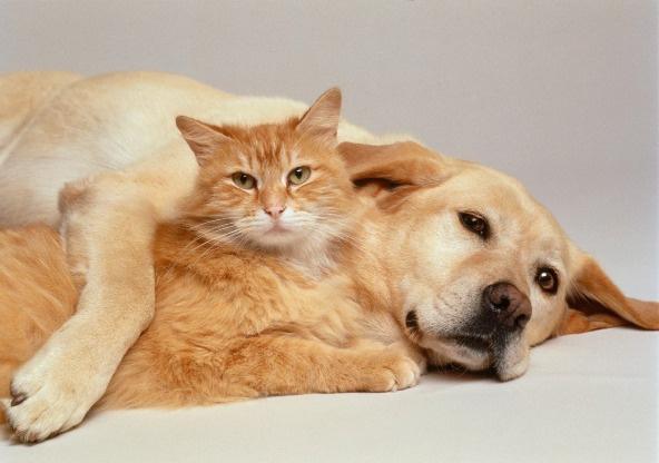 Как избавить дом от запаха домашних животных