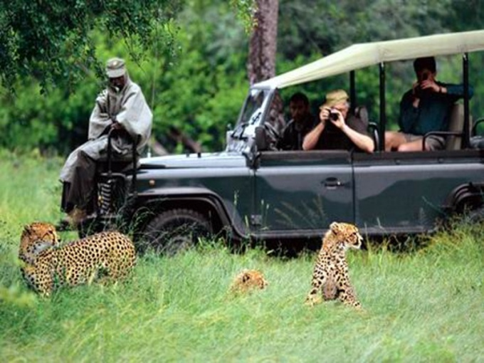 Сафари в африканских странах как вид активного отдыха