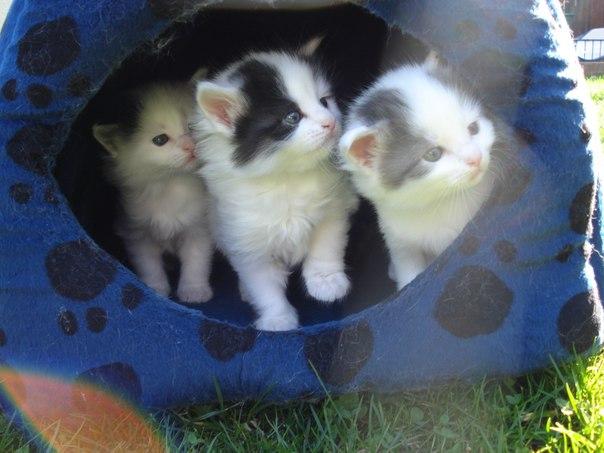 Как проверить здоровье кошки перед покупкой