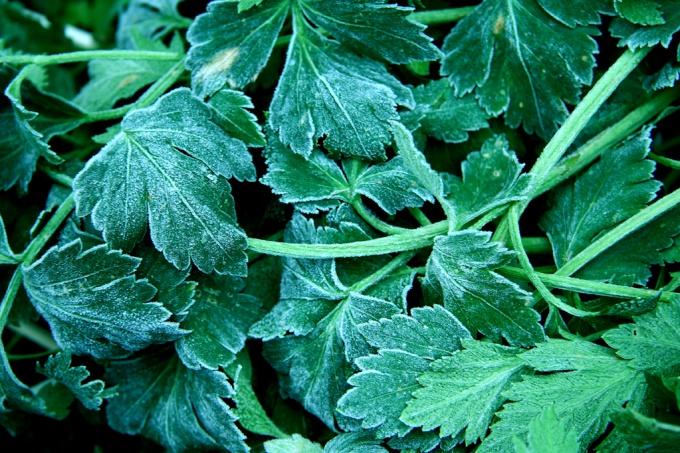 Что приготовить из замороженной зелени