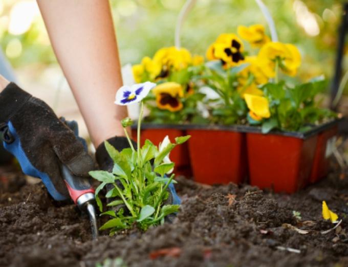 Какие семена цветов можно сажать в зиму 412