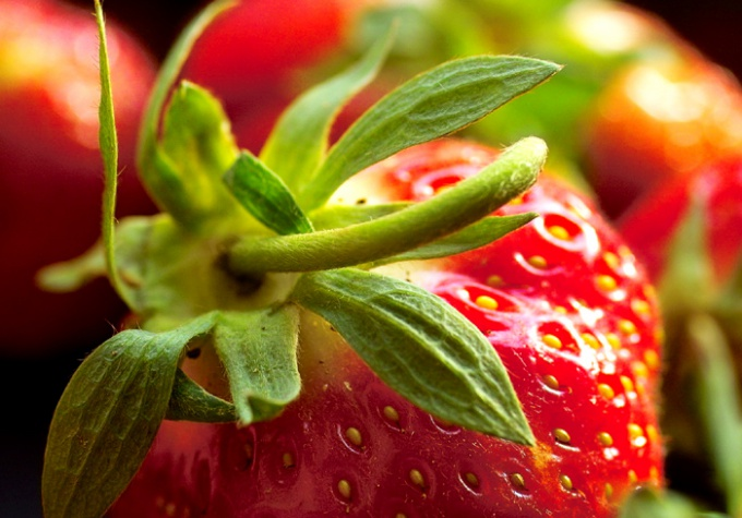 Fertilizing strawberries should be carried out in several stages